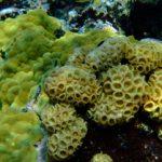 Benthic UW-Ken Marks pg 52_DSCF2824