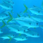 Fish UW - Jacks Craig Dahlgren