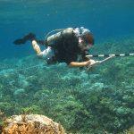 Mickey Charteris Fish diver