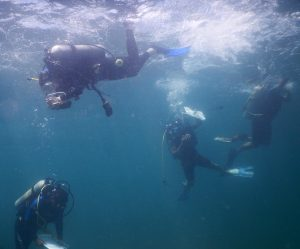 DR group training - dive