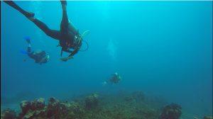 jamaica-in-water-training