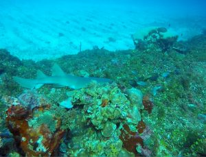 jamaica-reef