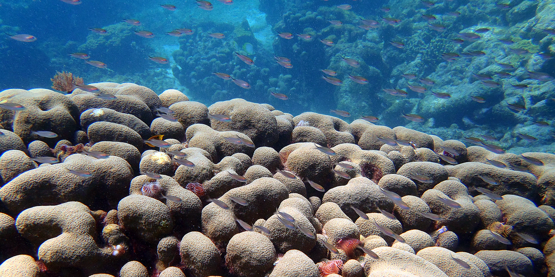 Agrra Partnerships Work On Coral Reef Conservation